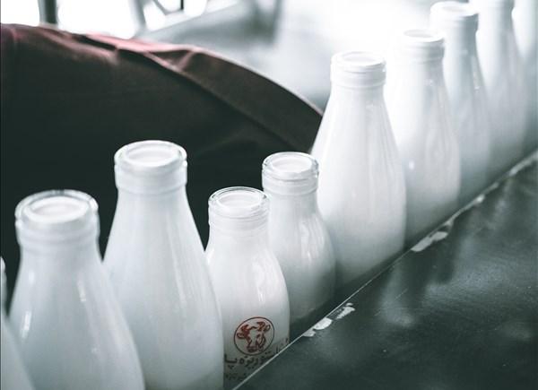 スターバックスのミルクは4種類から選べる!低脂肪乳、無脂肪乳、豆乳、ミルク
